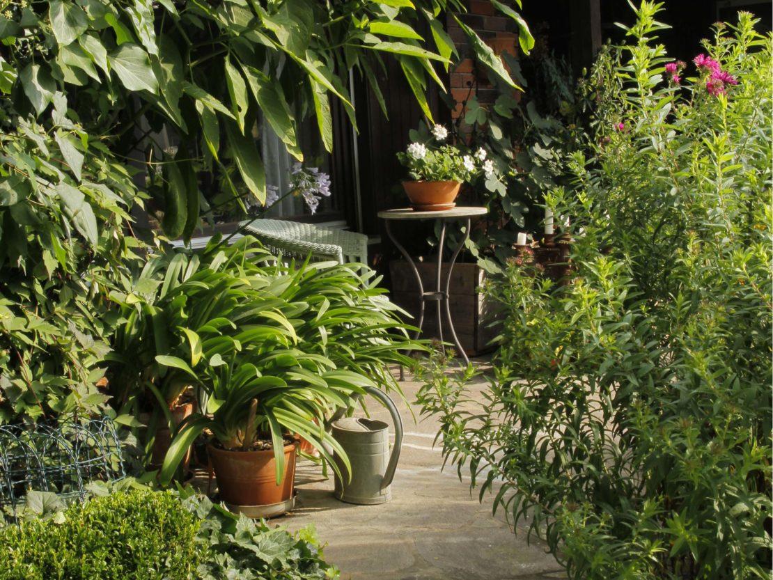 Agapanthus in kleinem Topf auf Terrasse