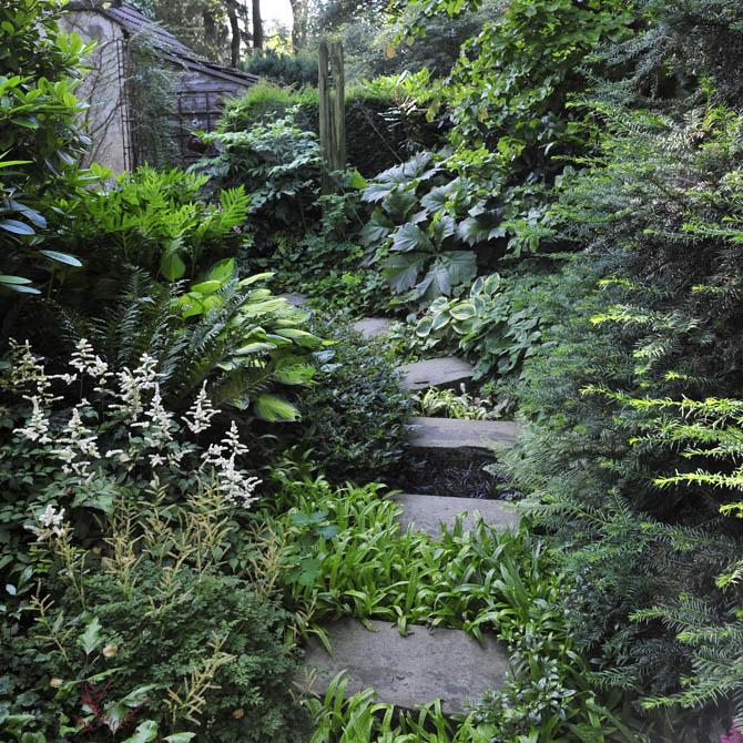 Prachtspiere mit weißen Blüten in verwunschen wirkendem Waldgarten