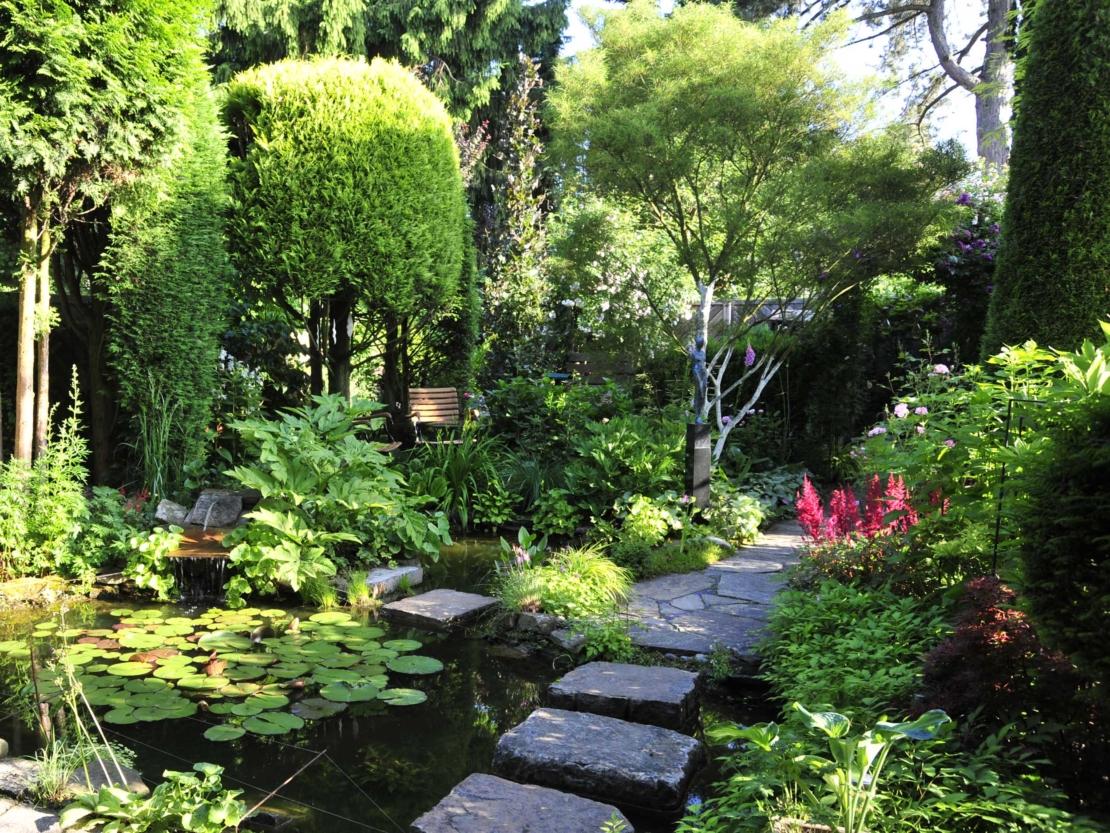 Prachtspieren am Rande eines Teiches in üppig grünem Garten