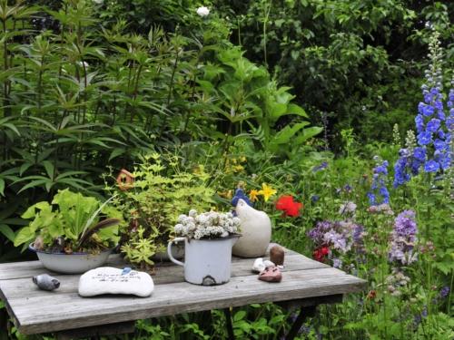 Waldmeister und andere Kräuter auf einem Tisch im Garten