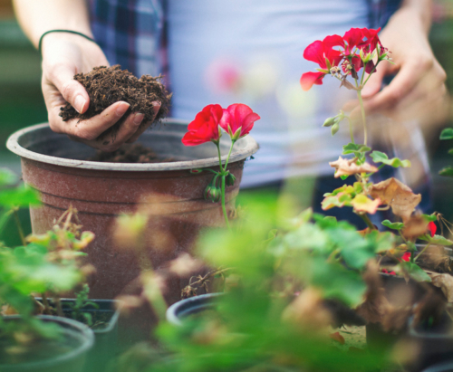Balkonblumen pflanzen