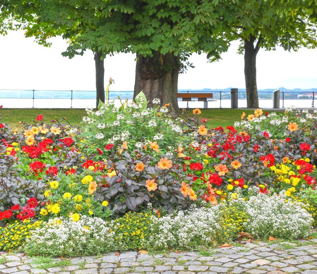 Straßenbaum gießen Foto: AdobeStock_SusaZoom