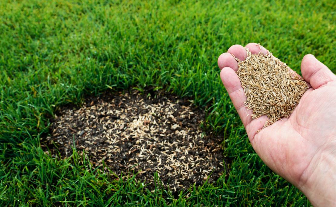Rasen durch Nachsaat reparieren