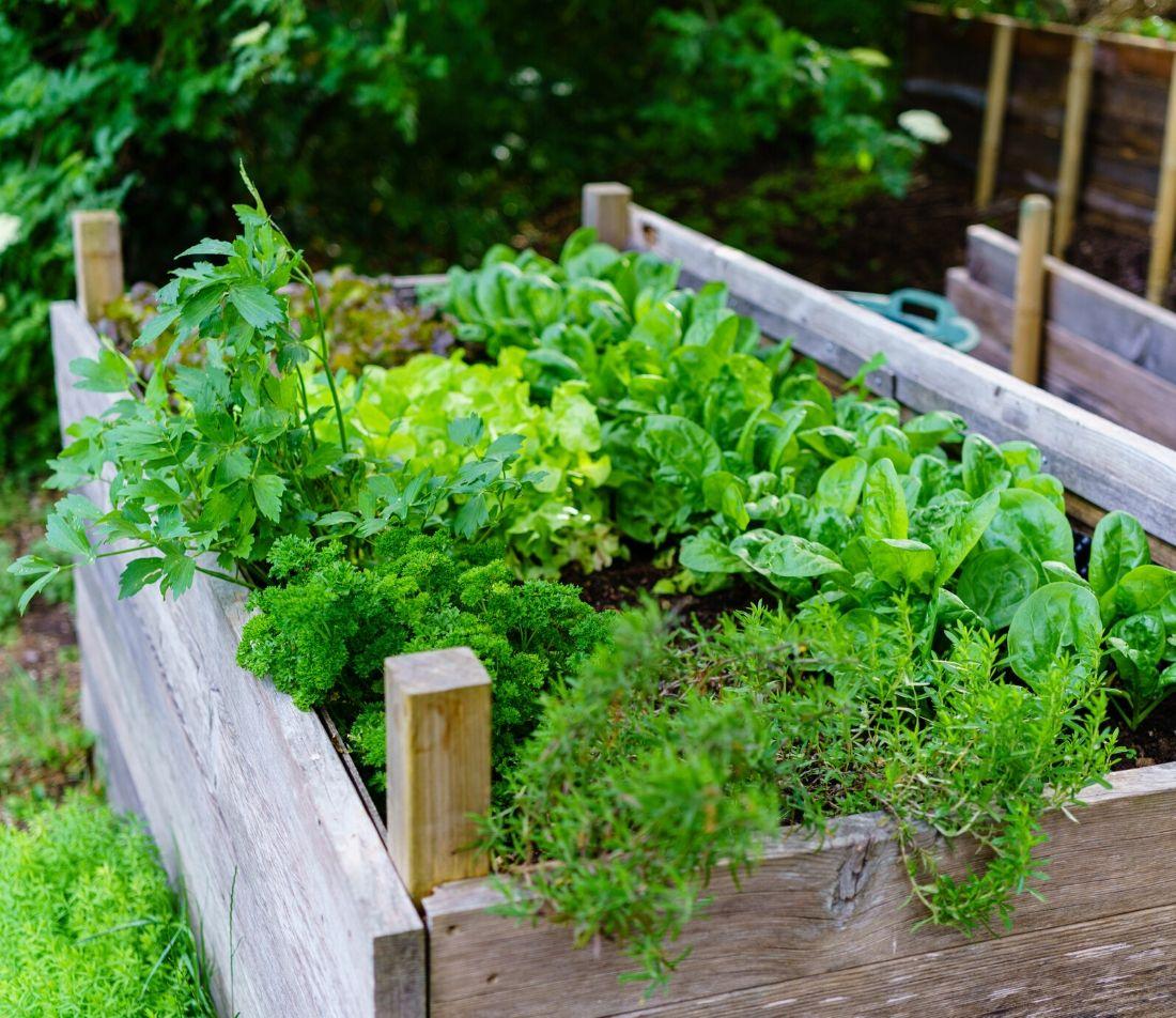 Mehr Abwechslung im Garten Foto: AdobeStock_JM_Soedher
