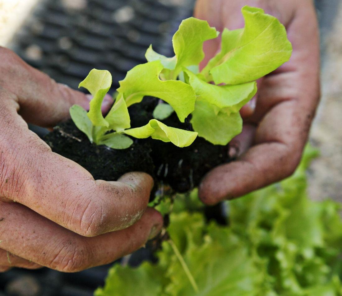 Gemüse Aussaat im Herbst Foto: AdobeStock_Friedberg