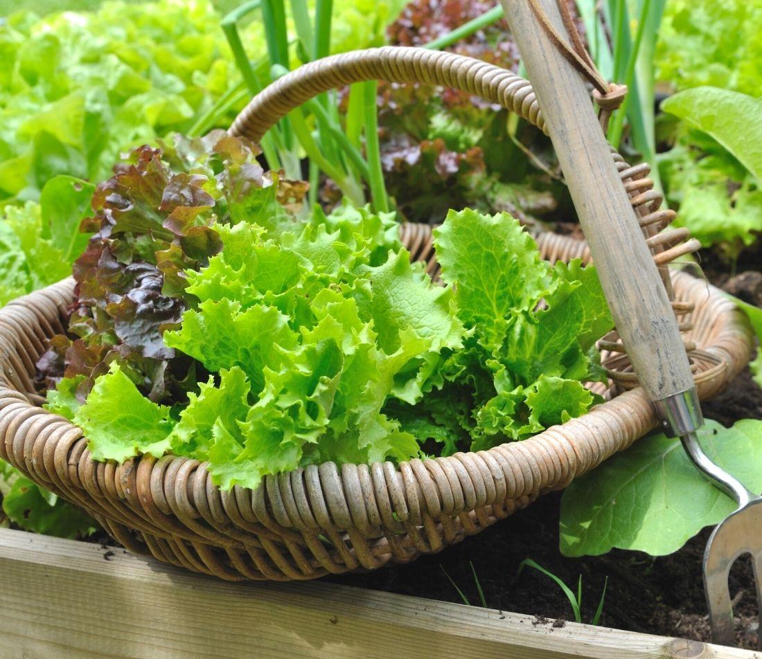 Salat Rezepte Foto: AdobeStock_coco