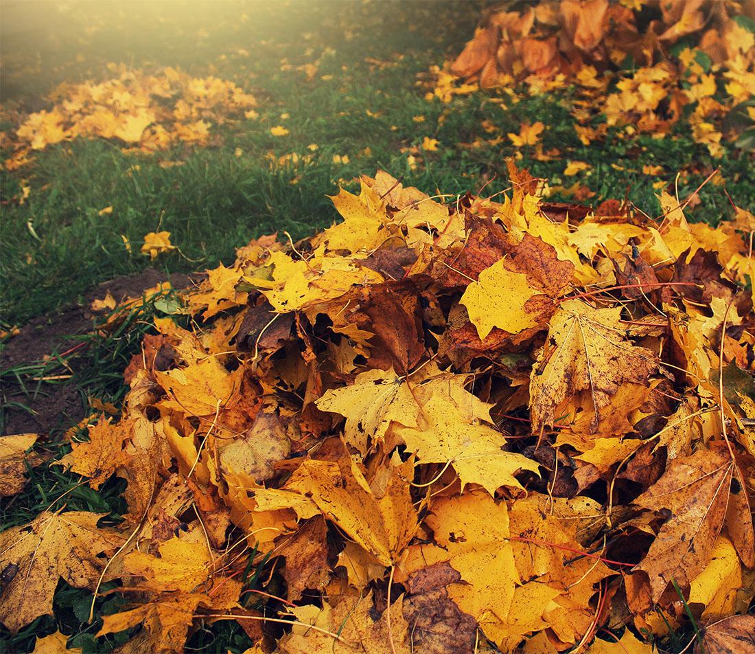 Naturgarten im Herbst Foto: AdobeStock_vaivirga