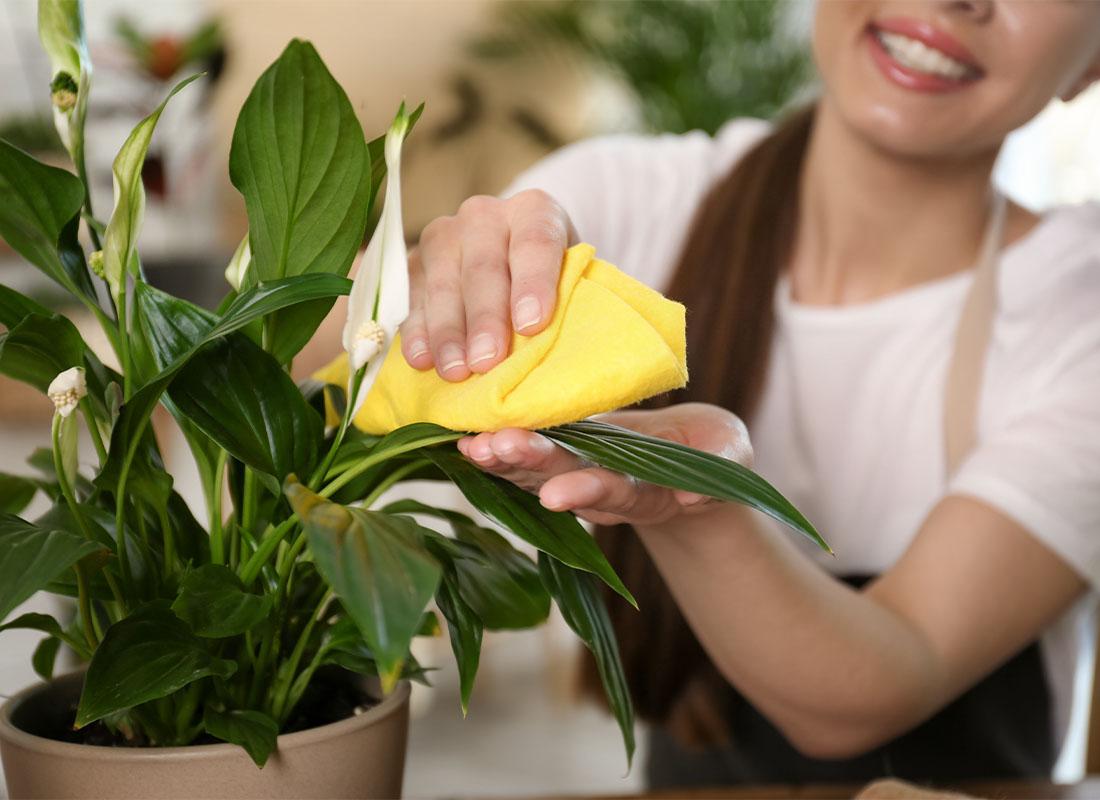Zimmerpflanze Pflege im Winter Foto: AdobeStock_New_Africa