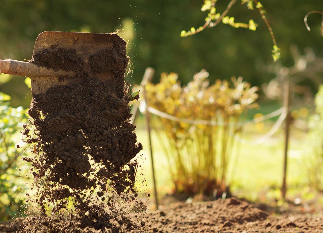 Dahlien pflanzen und pflegen Foto: AdobeStock_alexin21
