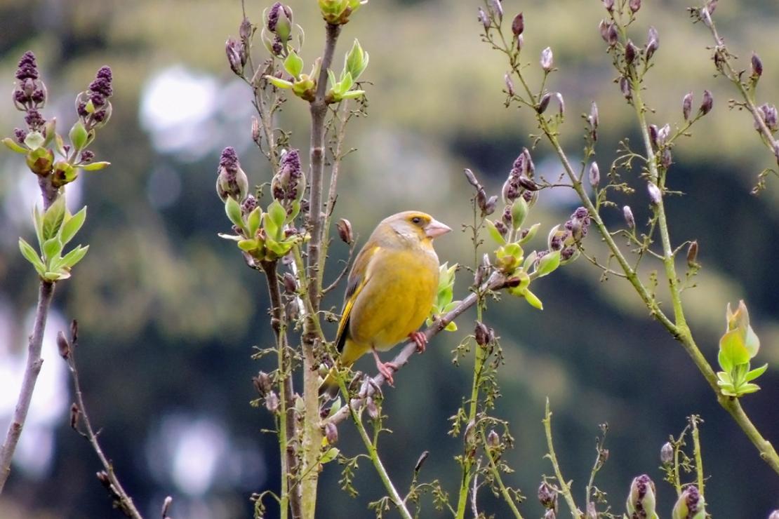 Gartenvögel Foto: AdobeStock_Zanoza-Ru