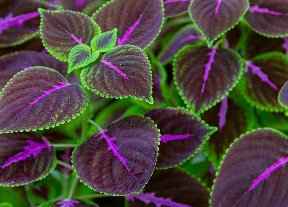 Pflegeleichte Zimmerpflanzen für Anfänger Foto: AdobeStock_Robert Leßmann
