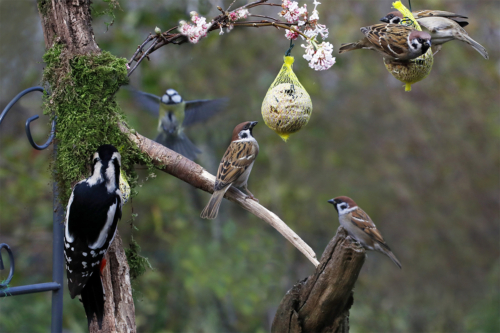 Vogelfutter Foto: AdobeStock_Aggi Schmid